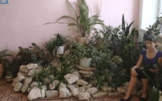 Альпийская горка в квартире: возможно ли создать альпинарий дома?