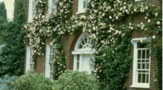 Как подобрать вьющиеся растения для вертикального озеленения сада