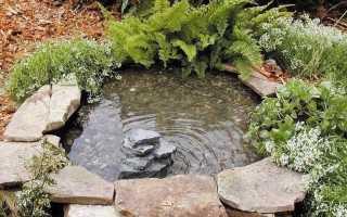 Декоративный пруд на даче: руководства и секреты по возведению