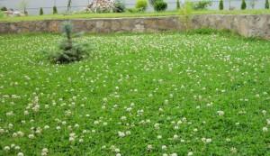 Образец газона