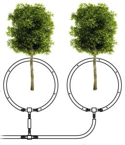 Расположение капульной линии при поливке деревьев