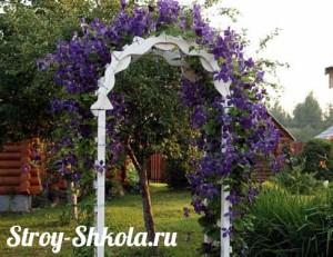 Растения для садовой арки