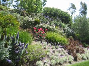 Растения для участка расположенного на склоне