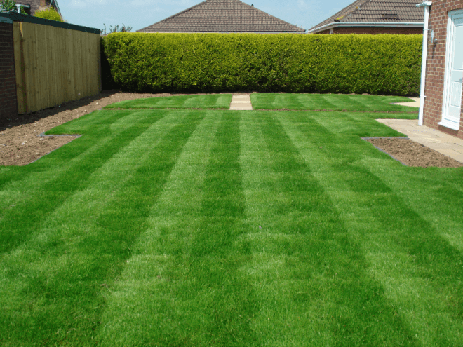Пример типичного газона на приусадебном участке.
