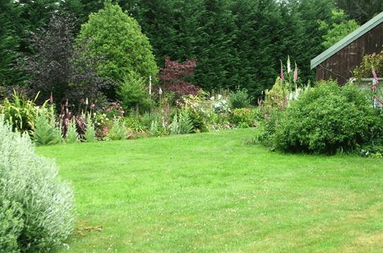 Садово-парковый газон на даче.