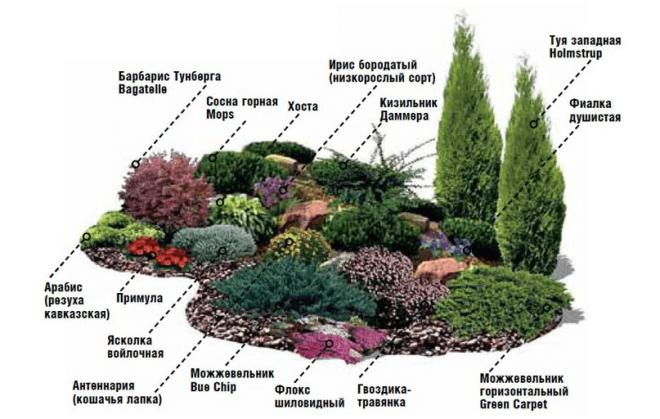 Самые распространенные растения, которые применяют для альпинария