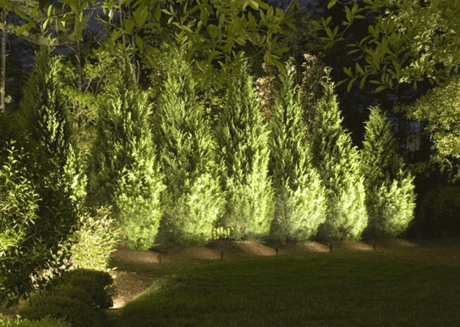 Декоративная подсветка хвойных деревьев на участке.