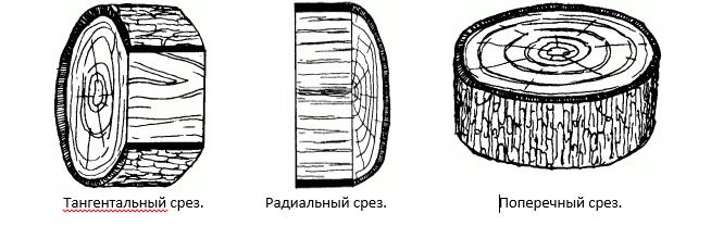 Три разных вида срезов в зависимости от направления