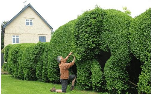 Оригинальная живая изгородь в виде цепочки слонов