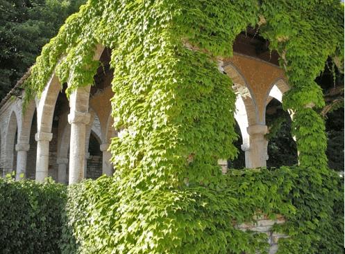 Вертикальное озеленение старинной колоннады
