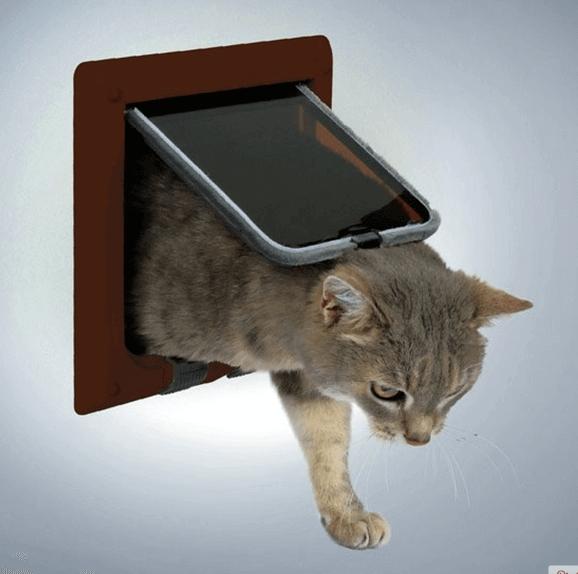 Кошка может самостоятельно решать, когда ей выйти из помещения или зайти в него