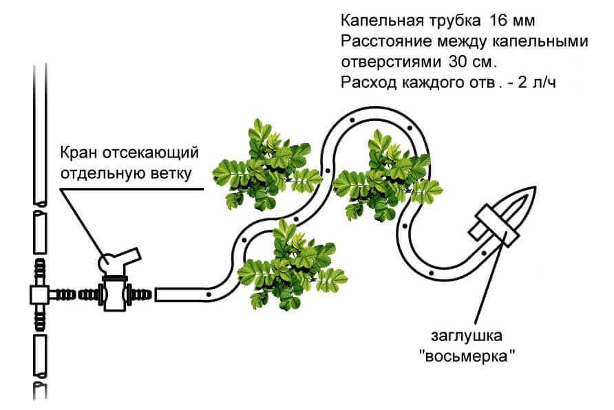 полив комнатных растений настоем луковой шелухи